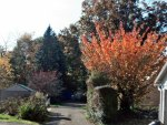 Beautiful Autumn View