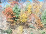 Fall Colors Blowing Rock, NC