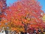 Gorgeous Autumn