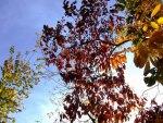 Peek a Boo Autumn Tree :)