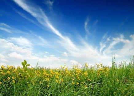yellow flower field - grass, field, yellow, flower