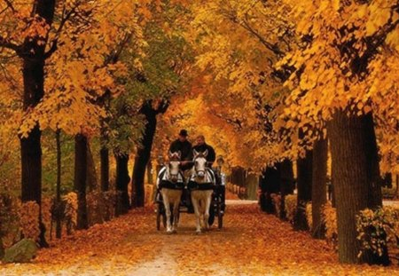 walk in the park - autumn, orange, fallen leaves, beauty, walk, park, horses