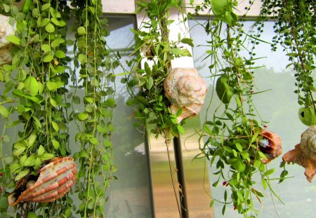 Climbing vine plants - lovely, decoration, climbing vine plants, shells