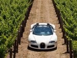 sports car in the vineyard