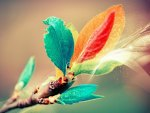 *** Twig  with colorful leaves ***