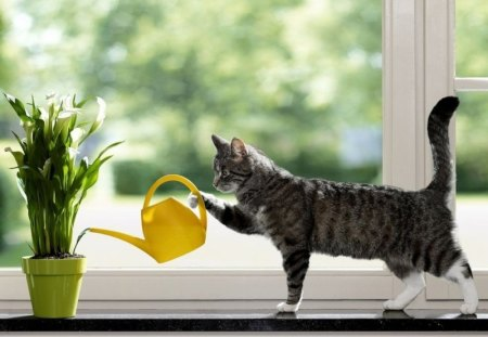 A Cat Watering Plants - doing, house, cat, holds