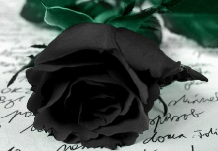 Promise - hd, sadness, rose, black rose, black, abstract, goth, fallen, photography, promise, darkness, wallpaper, dark, flowers