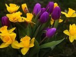 Lovely Purple and Yellow Combination