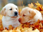 Playing in autumn leaves♥