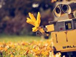Wall-E likes Autumn