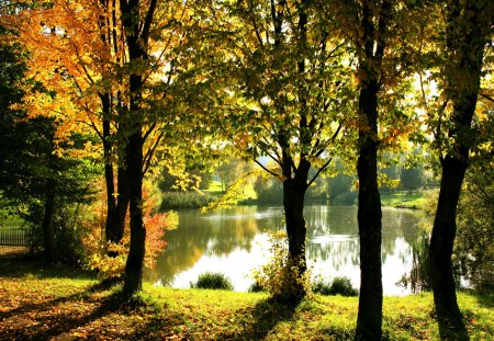 Lake in park - fall, autumn, glow, shore, falling, beautiful, foliage, mirrored, leaves, nice, season, reflection, forest, lovely, park, trees, lake, waters, pond, nature