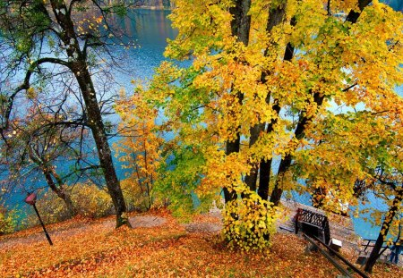 Autumn river view - stream, fall, pretty, colorful, autumn, riverbank, falling, yellow, beautiful, carpet, foliage, nice, river, rest, calmness, lovely, high, golden, relax, bench, waters, tree, serenity, slope, nature, branches