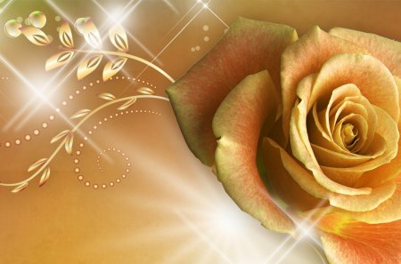 Golden Rose Flowers Nature Background Wallpapers On