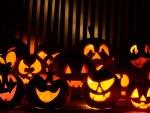 Many Halloween Pumpkins