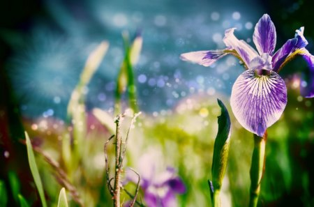 Pretty Flowers - water, purple, green, flowers, stems