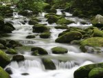 Flowing Mountain Stream