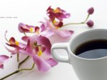 *** Cup of coffee and orchid ***