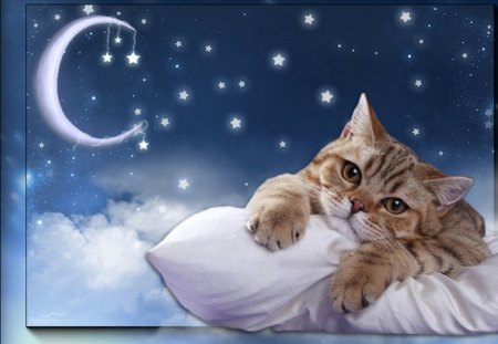 MY PILLOW AND ME... - stars, pillow, cat, night