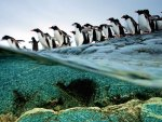 Penguins on the Reef
