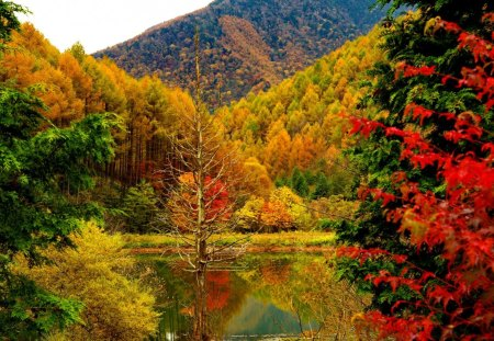 Autumn - fall, pretty, colorful, autumn, shore, slopes, falling, beautiful, foliage, mirrored, mountain, nice, bank, peaks, river, reflection, harmony, lovely, clear, colors, sky, trees, lake, crystal, nature, lakeshore