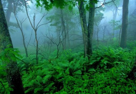 Lush Tropical Forest In Fog Forests Nature Background