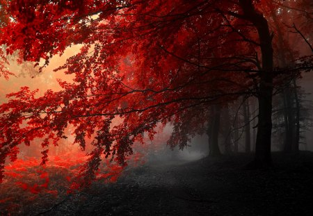Autumn Splendor - fall, red, pretty, autumn, foggy, woods, autumn leaves, beautiful, fog, leaves, splendor, pathway, autumn walk, path, autumn splendor, beauty, road, forest, lovely, view, red autumn, mist, autumn colors, peaceful, misty