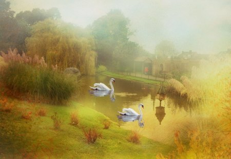 SWANS IN THE MIST - parks, lakes, waterscapes, grasses, reflections, swans, artworks, mist