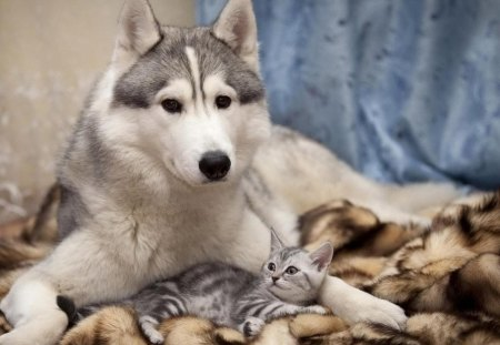 I Will Protect You My Friend :) - cat, protect, friends, dog