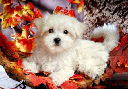 Cute White Puppy Dogs Animals Background Wallpapers On Desktop Nexus Image 1231511