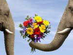 Elephants Flowers