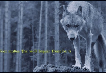 Fear The Wolf Dogs Animals Background Wallpapers On Desktop