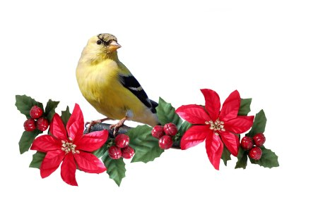 Poinsettias and bird - bird, christmas, flower, poinsettia, animal