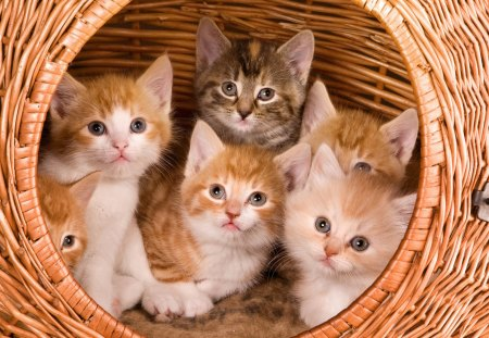 *** The family cat in a basket *** - family, basket, cat, cats, animals