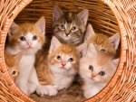 *** The family cat in a basket ***