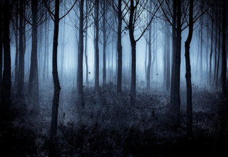 Mystery Forests Amp Nature Background Wallpapers On