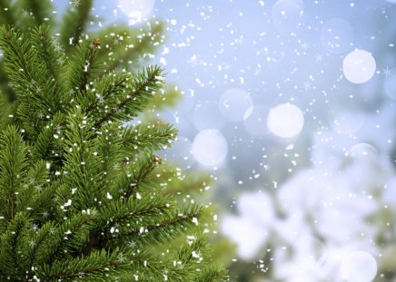 Snowflakes - beauty, lovely, snow, winter time, magic, landscape, beautiful, snowflakes, trees, nature, amazing, peaceful, winter, snowy, magic winter, clouds, view, bokeh, sky, splendor, mountains, tree