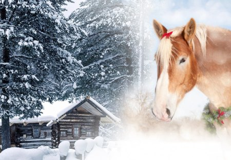 christmas horse and cabin winter nature background wallpapers on