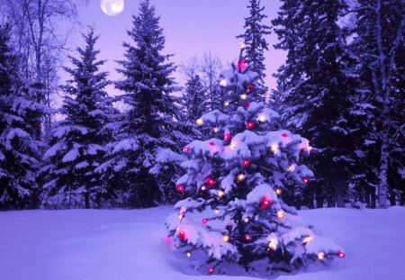 Snowy Christmas Tree Other Entertainment Background Wallpapers