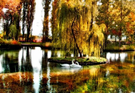 Swan pond - fall, colorful, autumn, shore, beautiful, swan, mirrored, nice, willow, reflection, lovely, clear, colors, lake, pond, water, nature, branches