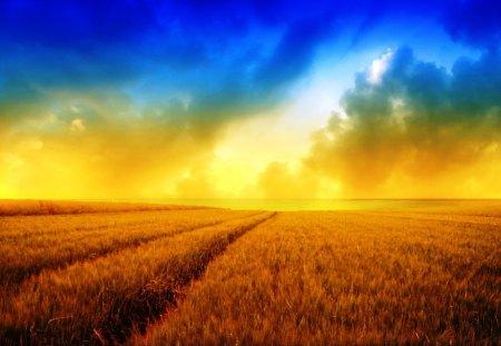 Sunny Harvest Harvest Background