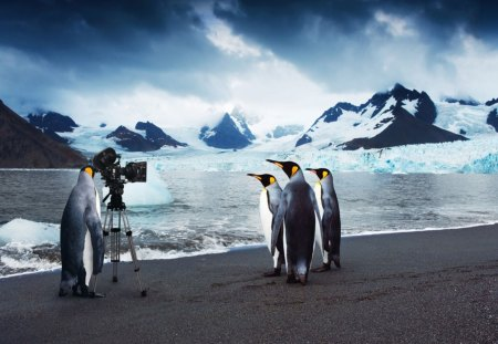 Penguin Moviestars