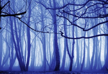 Fog in the Forest - image, foggy, paisaje, fog, ceanrio, nice, multicolor, scenario, beauty, forests, morning, paisage, wood, widescreen, dawn, paysage, cena, black, smoky, trees, winter, peisaje, panorama, cool, purple, awesome, violet, photoshop, white, landscape, colorful, gray, woods, beautiful, seasons, trunks, cold, picture, photography, leaves, grove, smoke, scenery, blue, photo, amazing, view, magenta, colors, leaf, paisagem, day, colours, nature, branches, frozen, natural, scene