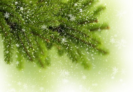 Snowflakes - winter time, christmas tree, merry christmas, magic, tree, nature, beauty, beautiful, lovely, snow, winter, snowflakes, xmas, pretty, snowy, green