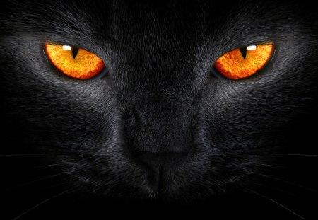 Black Cat Cats Animals Background Wallpapers On Desktop Nexus Image 1239208