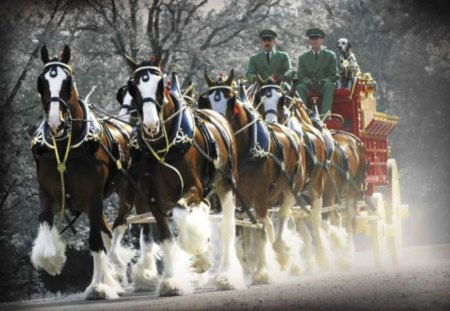 Budweiser Clydesdales - clydesdales, christmas horses, budweiser, christmas clydesdales, budweiser clydesdales