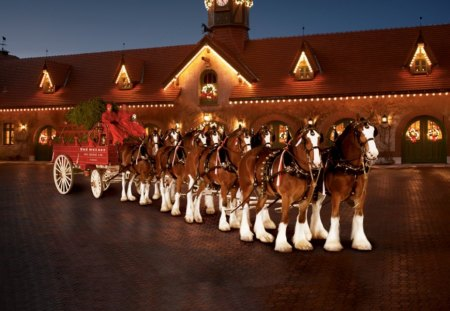 Christmas Clydesdales - budweiser clydesdales, christmas horses, budweiser, clydesdales, christmas clydesdales