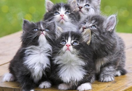 Kittens - furry, cute, fluffy, kittens, funny, cats, animals, sweet