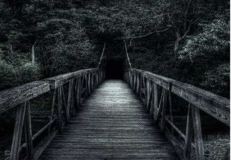 this road goes to the dark - road, wooden, dark