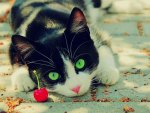 ♥kitten with green eyes♥