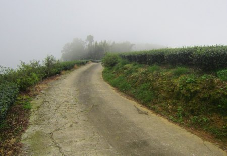 Misty road - mountain, misty, tea plantations, road